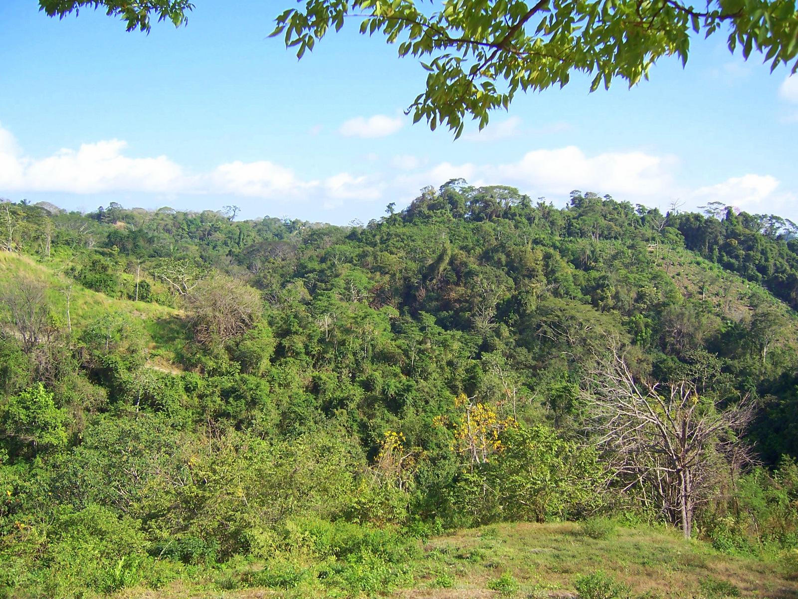 Lote Maravilla Phe 24 Costa Rica Mal Pais Real Estate Agent Properties